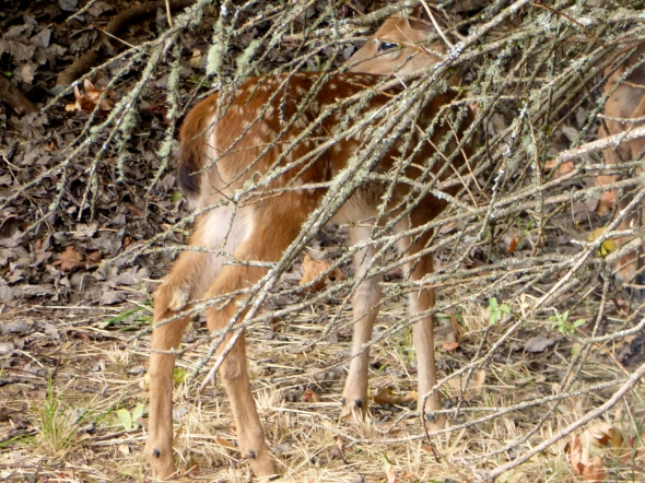 Fawn among Branches