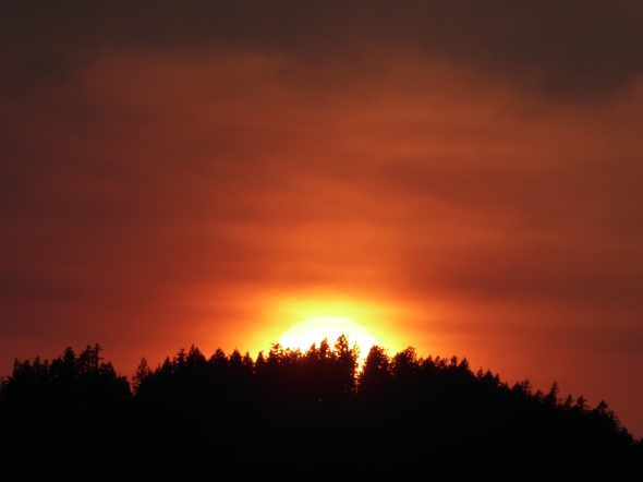 Sun setting into forested ridge