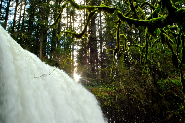 Sun and mossy branches over waterfall in forest