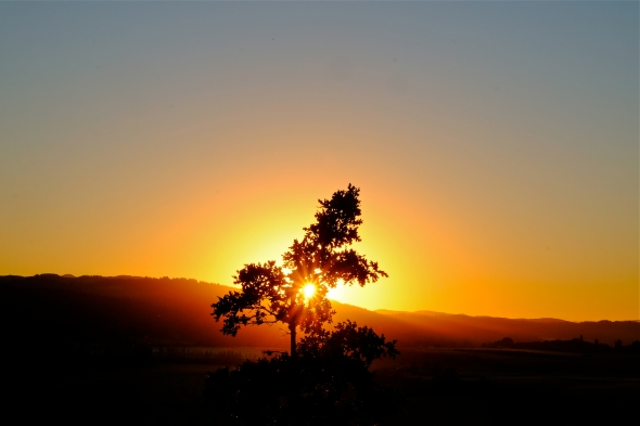Yellow sun setting over low mountain ridges behind silhouetted oak tree