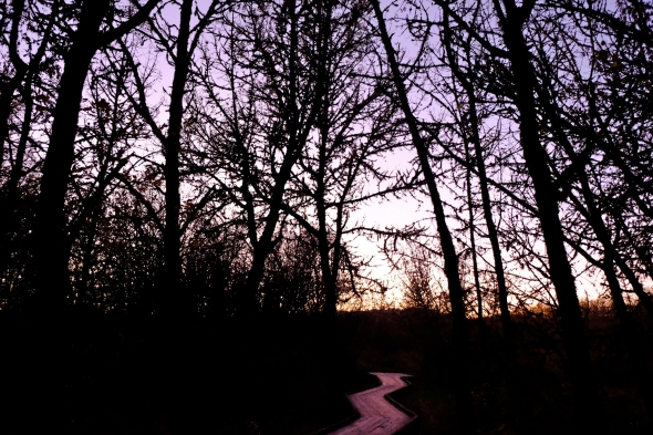 Boardwalk leading into marsh forest of bare trees with lavender sky at dusk