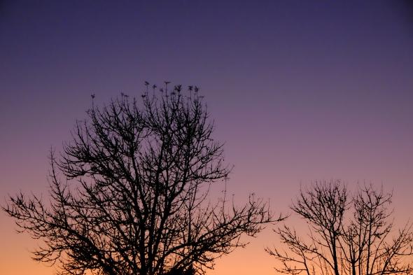 dscf8462-baretreesilhouettes-jfwetlands-corvallisor-10oct2016