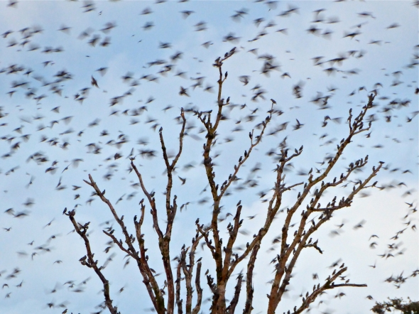 Large, bare tree full of small birds with dozens of others flying past in a blur