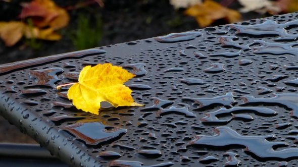 Yellow maple leaf on black outdoor metal table with raindrop puddles