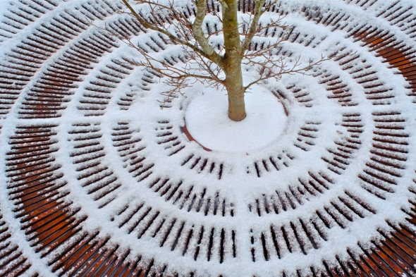 Base of small tree surrounded by snow-covered concentric circles of metal grating