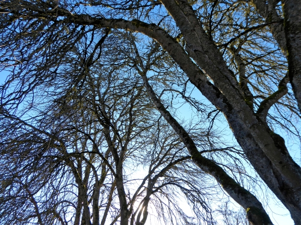 Many bare branches against blue sky with sun shining through at bottom center