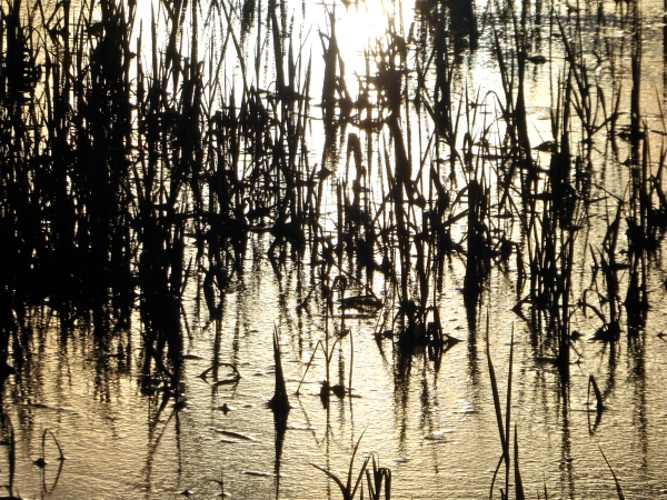 Marsh grasses silhouetted against gold background