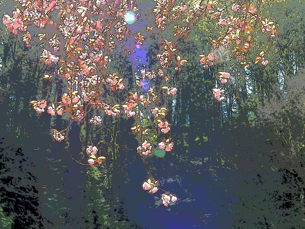 Abstract cherry blossoms with forest in backbround