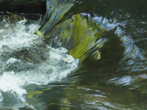 Green and white water flowing in small creek