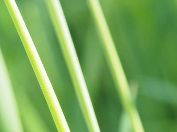 Close-up of grass stems on green meadow