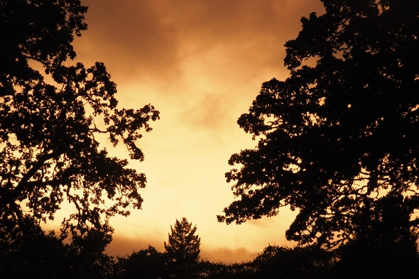 Silhouetted trees and bright ochre twilight sky