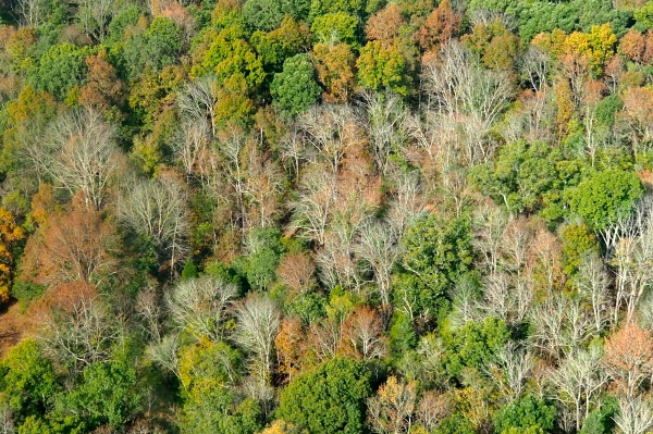Autumn hillside of green, orange and bare trees