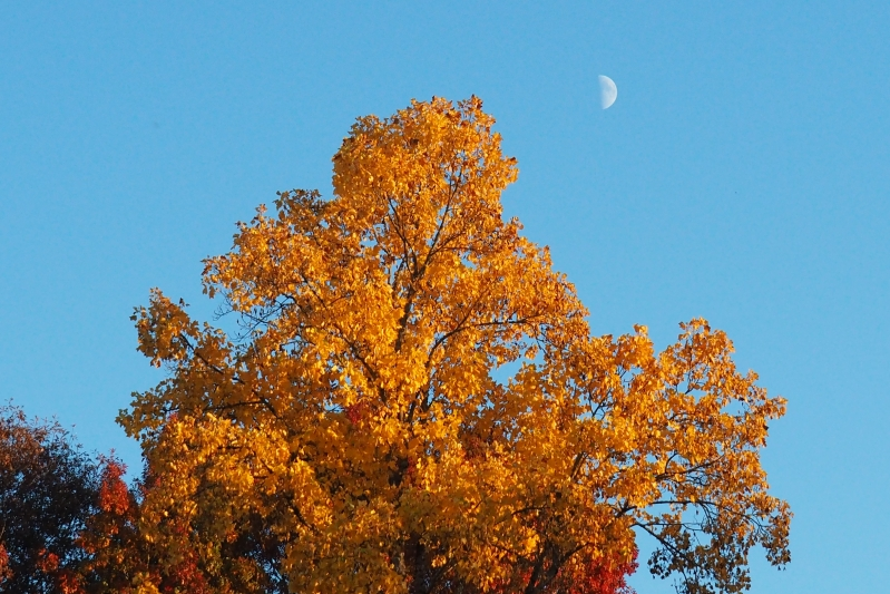 Golden tree with quarter moon in sky