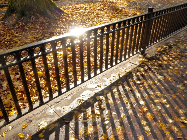 Fence, Fallen Leaves and Sunlight