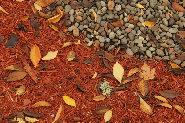 Fallen Leaves, Bark Dust, and Pebbles