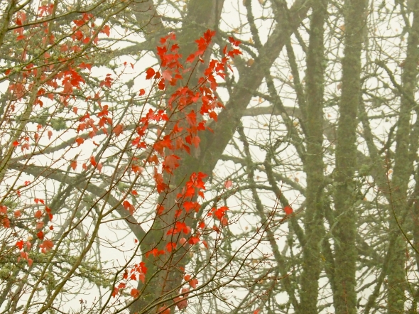 Red maple leaves and bare trees