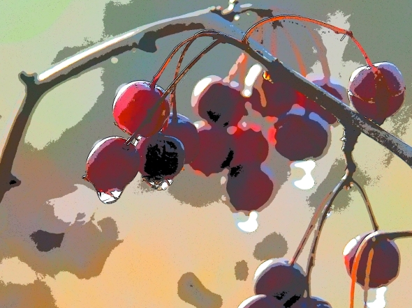 Red berries hanging on a branch