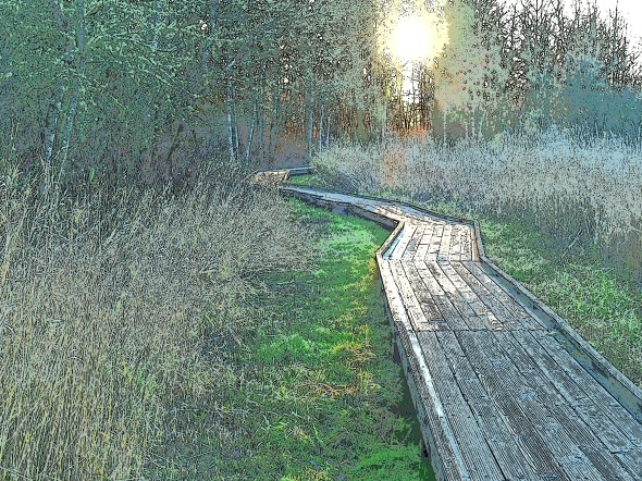 Boardwalk in marsh leading toward setting sun