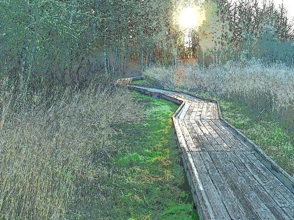 Boardwalk in marsh leading toward setting sun