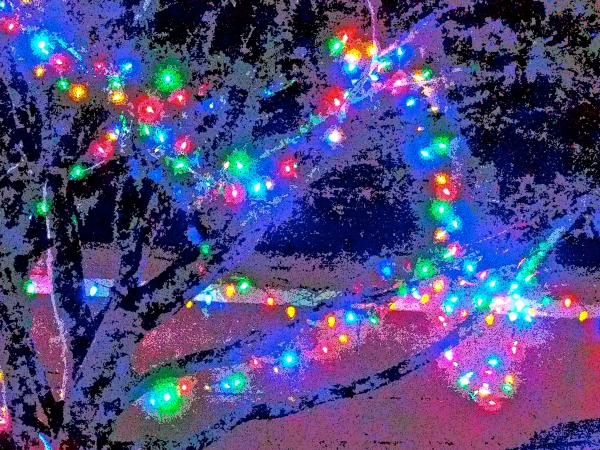 Red, green, blue and yellow Christmas lights in tree branches at night