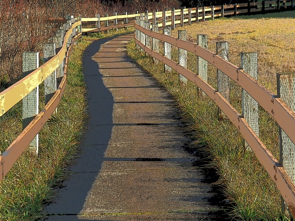 Curved pathway bordered by wooden railings