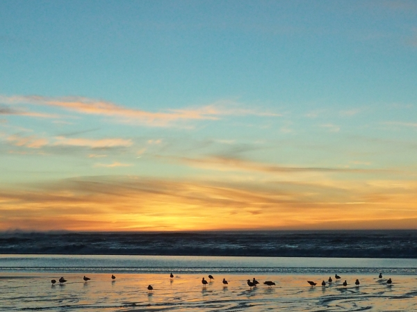 Silhouetted seagulls on beach and orange sunset sky
