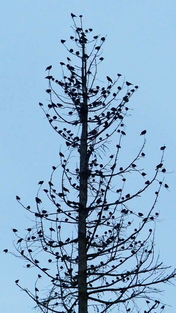 Bare tree full of birds