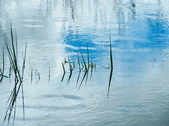Marsh grasses in wetlands