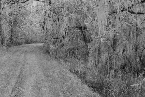 Road through forest draped in lichen