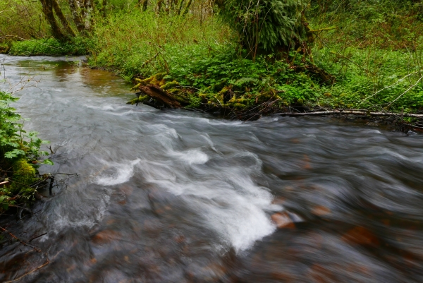 Stream flowing through green forest