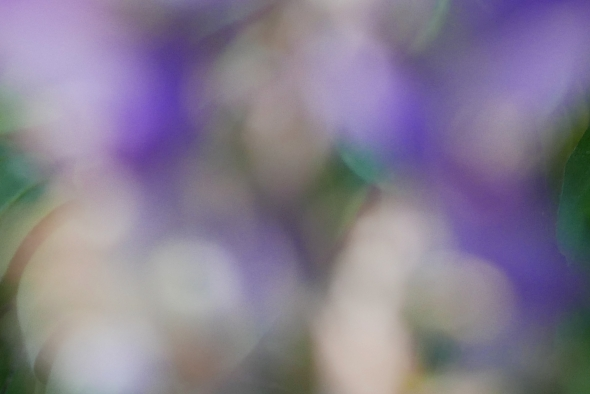 Blurred flowers and leaves