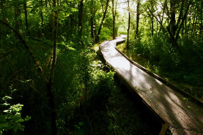 boardwalk leading away through trees toward sun
