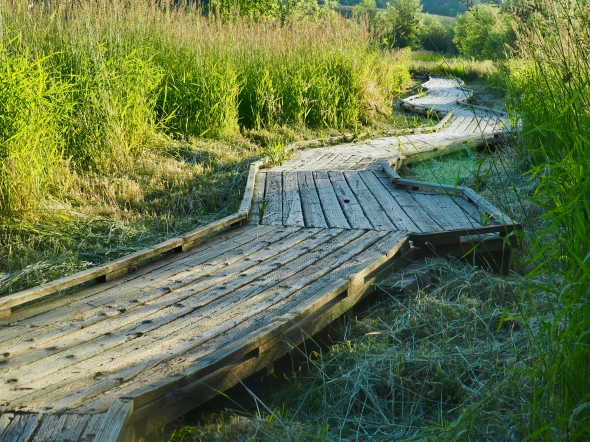 Boardwalk curving through grassy marsh