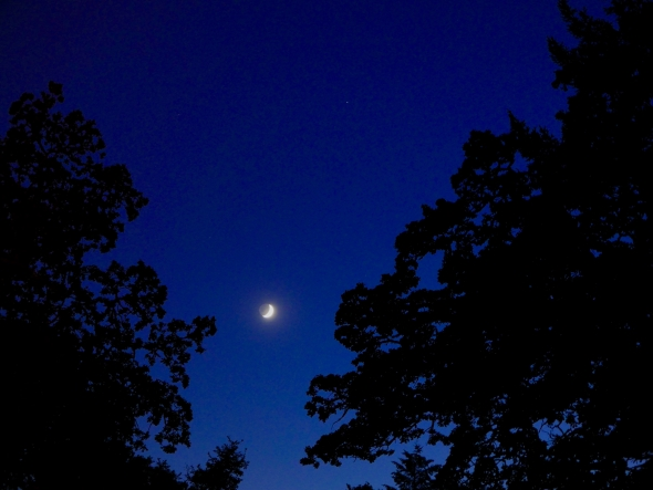 Crescent moon and silhouetted trees in evening sky
