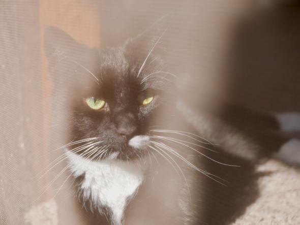 Black-and-white cat