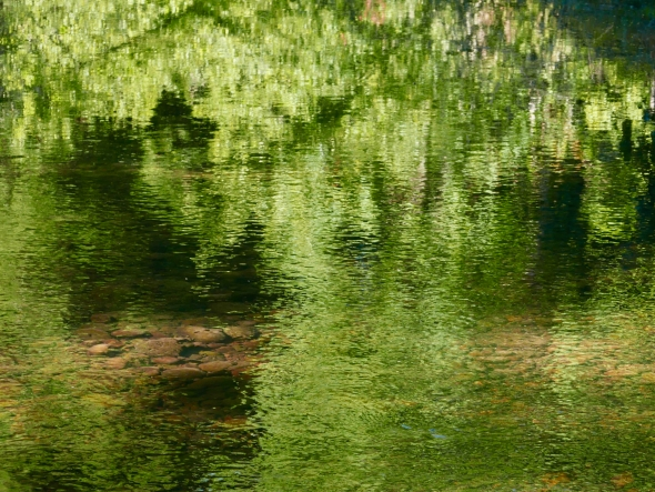 Green reflections in river