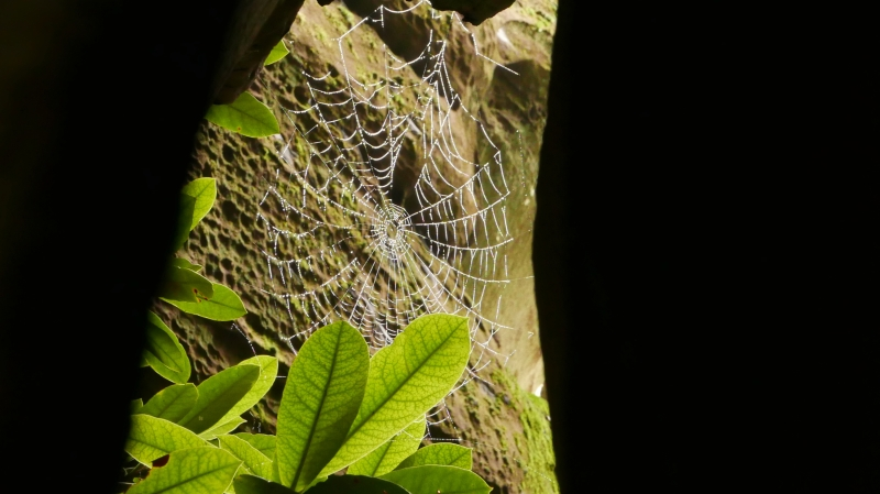 Spiderweb, leaves and sandstone