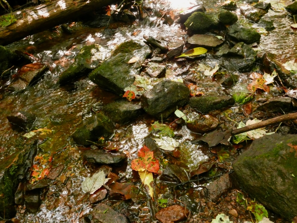 Rocky stream and fallen leaves