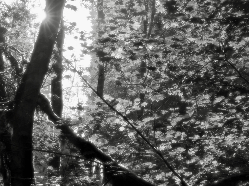 Black-and-white forest of trees and leaves