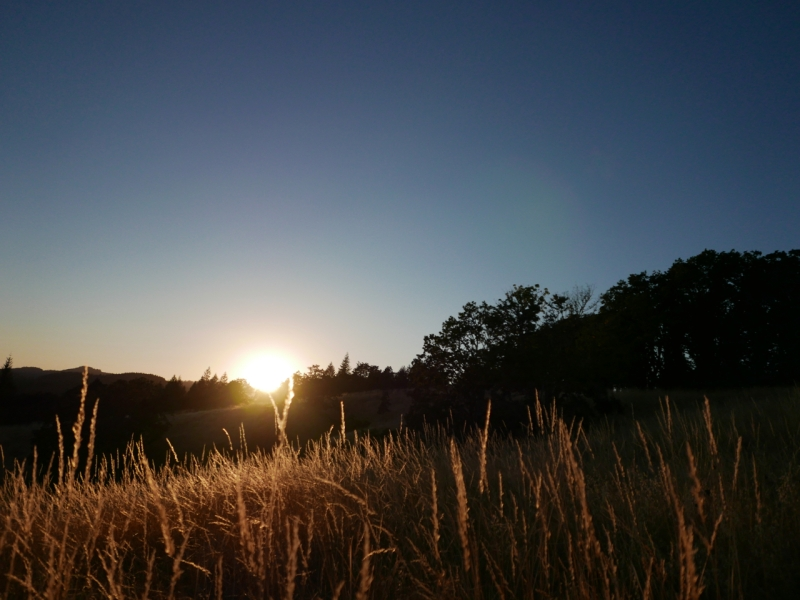 Sunset over silhouetted trees and golden grasses