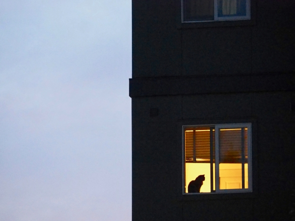 Cat silhouetted in window
