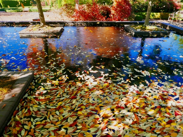 Colorful autumn leaves and orange reflections in pool