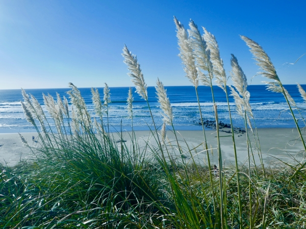 Grasses, blue sky, beach and ocean
