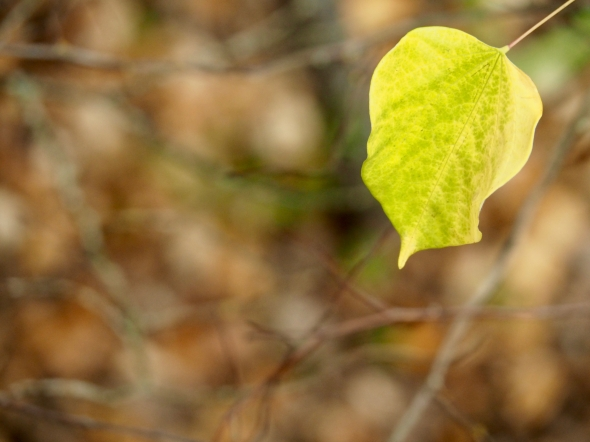 Yellow and green leaf hanging