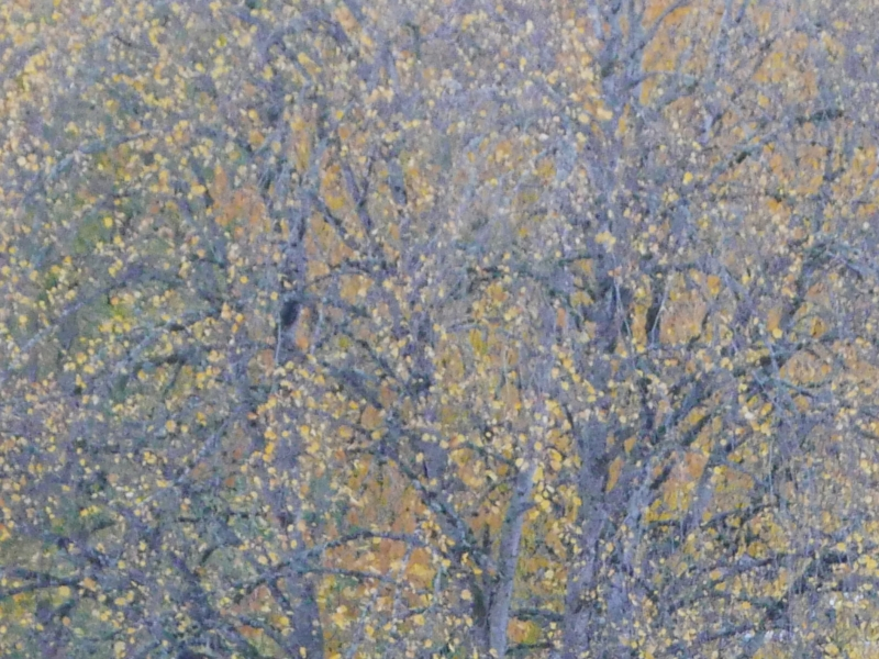 Tree trunks, branches and yellow leaves