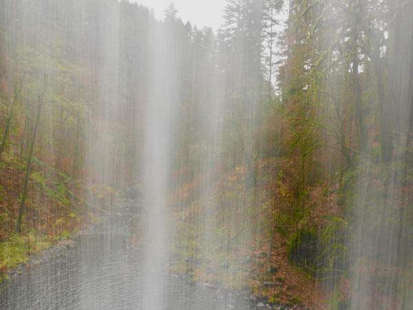View of forest looking through from back side of waterfall