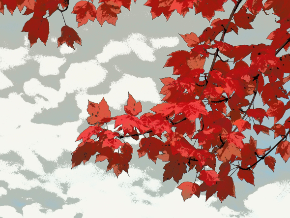 Red maple leaves against a white and grey sky