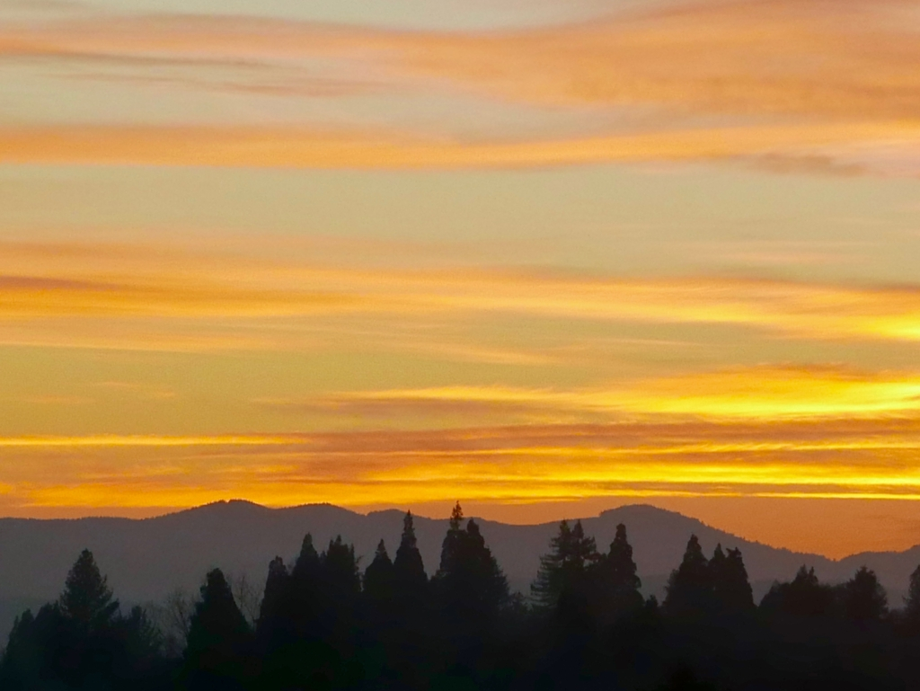 Large trees silhouetted in front of mountains and orange sky