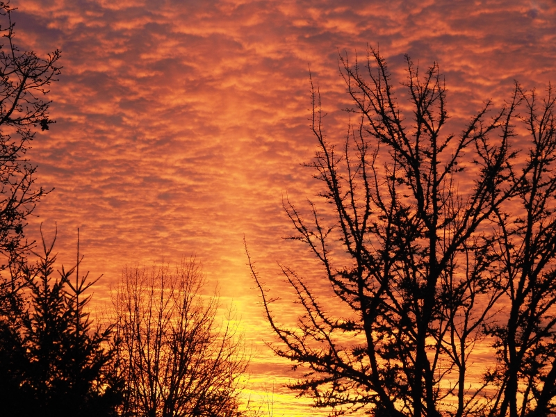 Orange clouds and silhouettes of bare trees