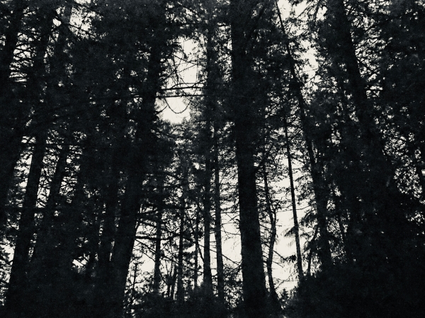 Large trees in black-and-white silhouette against sky